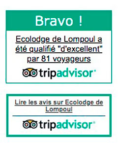 Trip Advisor - Badge BRAVO